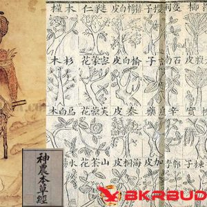 The oldest written Chinese manuscript focusing solely on the medicinal use of plants by Shennong, The Ben Cao Jing